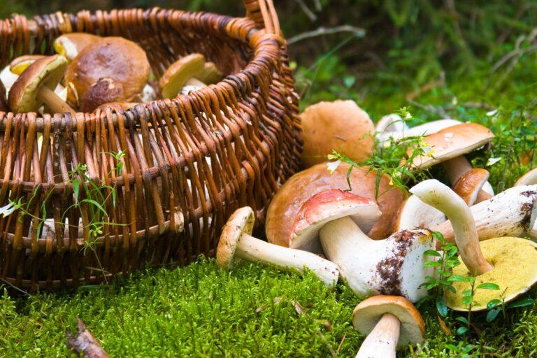 Asturias: Paraiso micológico